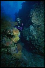 156047 Underwater Canyon Filled With Soft Corals And Sea Fans A4 Photo Print