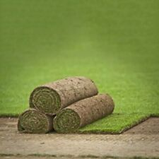 Real Grass Turf Rolls Garden Landscape Supplies (North West Only) 1 Square Meter