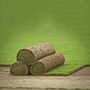 Real Grass Turf Rolls Garden Landscape Supplies (NORTH WEST ONLY) 50 Sq. Meters