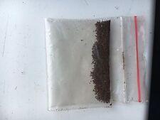 TABAC semences 1000 graines au moins - GOLDEN VIRGINIA - plantes UK