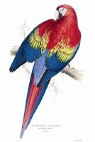 John Gould Native Animals Birds print parrot painting Vintage Old Australia art