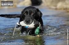 Avery Greenhead Gear GHG Dog EZ Bird ATB Mallard Duck Training Bumper Dummy NEW