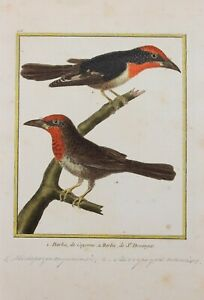 Martinet & Buffon Hand colored Birds pl.206 Bearded from Cayenne