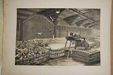 ESTAMPE 19è N&B A.BROUILLET HALLES Gavage Pigeons Paris typogravure 1886 Gillot