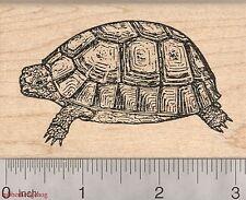 Russian Tortoise Rubber Stamp, Turtle K2015 WM