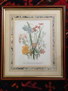 "Lovely Framed Botanical Print by Manuscript Limited Series 581 15.1/2 x 13.1/2"""