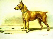 Megargee Miniature Pinscher 1942 Dog Art Print Matted