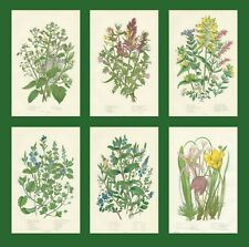 SET OF 6 X ORIGINAL 1880 ANNE PRATT FLOWERS FERN PRINTS CHROMOLITHOGRAPHS 3-1