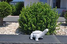 SCHILDKRÖTE Granit Stein-Figur - Dekoration für Haus, Terrasse, Garten Feng Shui
