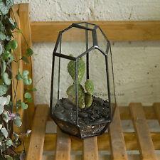 Glass garden pots boxes ebay irregular glass geometric terrarium desktop succulents plants flower planter pot workwithnaturefo