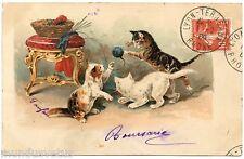 JEUX DE CHATS . CATS . KATZE . GATO .