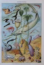 Original 1948 Paris Book Print French Encyclopedia Scientific Deep Sea Fish Eel