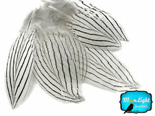 30-50 Pieces Natural White Silver Pheasant Plumage Barred Feathers Jewelry
