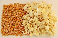 Corn seeds  Popcorn Ukraine heirloom Organic seeds average