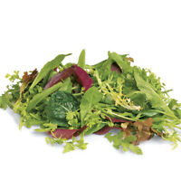 MESCLUN MIX 400+ Seeds QUICK GOURMET MIXED SALAD lettuces spinach rocket endive