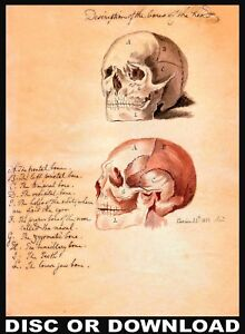 MAKE & SELL ANTIQUE ANATOMY PRINTS – Restored Image Collection by Timecamera