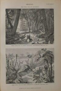 1886 Aufdruck Geology Ideal Landschaften Kohle & Lias Perioden Baum Farn