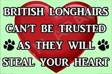 BRITISH LONGHAIRS CAN'T BE TRUSTED THEY WILL STEAL YOUR HEART FRIDGE MAGNET CAT