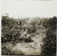 Africa Nera Foto NB15 Placca Da Lente Stereo Vintage Ca 1910