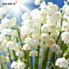White Lily of the Valley Flower Convallaria Majalis Seeds Rich Aroma Bonsai Flow
