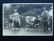 More details for farming portrait farmers with young bulls cattle country life - old rp postcard