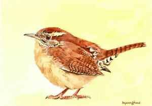 A wren, 5 x 7 inches Art print of an original watercolor painting by Anna Lee
