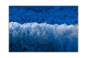 Blue Winter Forest Landscape Wall Prints Poster Art Home Decoration Pictures
