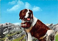 BR71996 st bernard italy vallee d aoste chien dog   animal animaux
