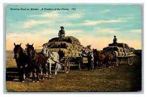 Hauling Wool to Market, Product of the Plains Postcard Posted Huntington IN 1910