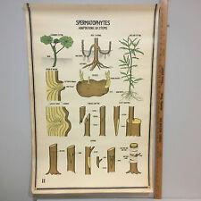 Vintage Adaptations Of Stems Botanical Chart Poster 40's Art Print Original