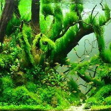 Aquarium Plant Seeds Fish Tank Aquatic Water Grass Foreground Easy Plant Water