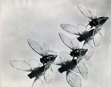 Pierre Auradon tirage argentique époque cigalles photo photographie