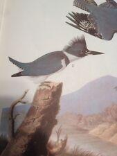 Belted Kingfisher John James Audubon Print Picture Bird Art Birds