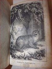 STORIA NATURALE - Tschudi: Tierleben der Alpenwelt 1860 Ritratto Tavole Animali