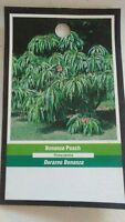 BONANZA PEACH 5 GAL Tree New Live Healthy Trees Fruit Garden Plant Sweet Peaches