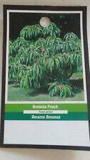 4'-5' BONANZA PEACH Tree New Live Healthy Trees Fruit Garden Plant Home Peaches