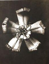 1942 FOTO ORIGINALE STAMPA ROTOCALCO PIASTRA 20. Karl Blossfeldt astratto botanico