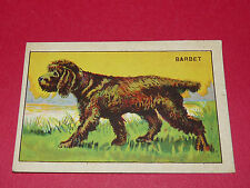 1920-1930 CHROMO GRANDE IMAGE ECOLE BON-POINT ANIMAUX CHIEN BARBET DOG HUND
