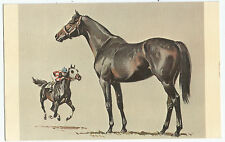 Thoroughbred Thoroughbreds Horse Horses Jockey Vintage Postcard  00004000