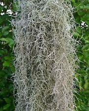 Spanish Moss~Live Air Plant~tons of uses!~2.5 Gallon Bag-Lots