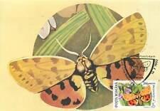 Rhyparia purpurata butterfly Postcard