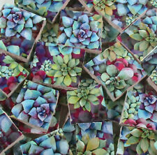 Ceramic Mosaic Tiles - Succulents Blue Purple Green Mosaic Tile Pieces Mosaic
