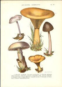 Stampa antica FUNGHI Laccaria Clitocybe Amanita ovolo 1927 Old Antique print