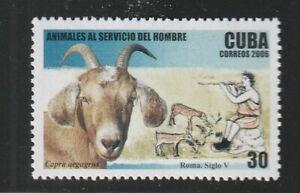 Goat, Ram,