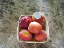 Experimental Hybrid Peach X Plum fruit tree LIVE PLANT