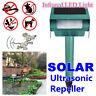 Répulsif à Ultrasons Solaire Ultrasonique Ravageur Animaux Détection de  *