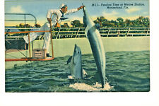 Postcard Marineland Feeding Time at Marine Studies Fl Pudgy The Porpoise. G