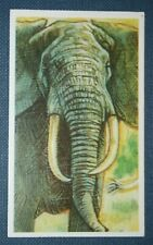 AFRICAN ELEPHANT  Tusker   Superb Illustrated Card  Unmounted