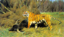 Oil painting wilhelm kuhnert - a tiger with its prey bison in landscape canvas