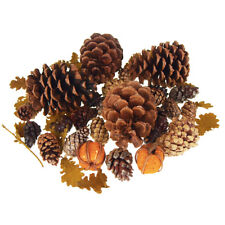Dried Scented Pine Cones Natural Forms with Pumpkins, 40-Piece